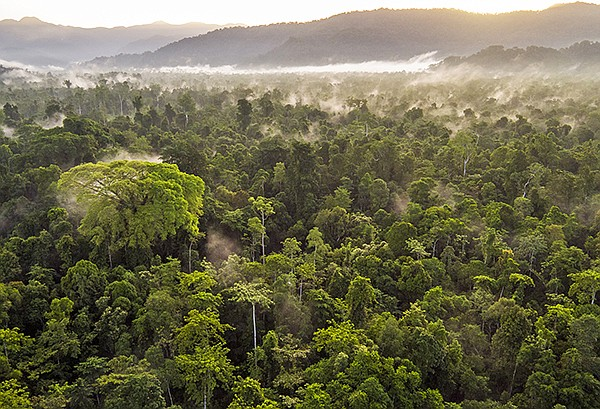 Canopy now has 156 brands—with revenues totaling more than $78.5 billion—joining its Pack4Good initiative, which is focused on eliminating forest fibers from packaging. | Photo courtesy of Paul Hilton / the Leuser Ecosystem Indonesia