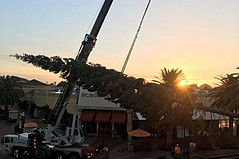 World's Tallest Xmas Tree at Citadel