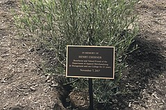 Cherner Memorialized with Tree Planting