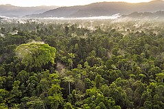 Canopy Adds 29 Brands to Its Pack4Good Initiative to Save Forests