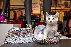 Skechers' Philanthropic Efforts for Animals Surpass $7 Million in Donations