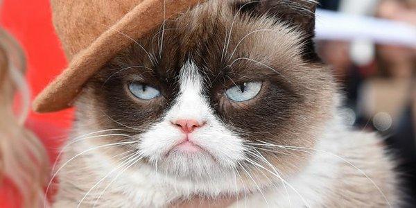 Puts the grrr in grumpy. Image via Google News.