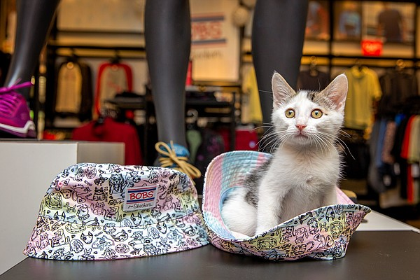 BOBS, the philanthropic division for Skechers, reached a new donation milestone for animals in need by surpassing $7 million.